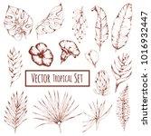 vector monochrome set of... | Shutterstock .eps vector #1016932447