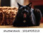 black cat sitting in the living ... | Shutterstock . vector #1016935213