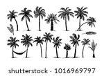 palm tree illustration | Shutterstock .eps vector #1016969797