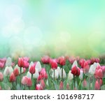 Beautiful Tulip Background