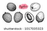 ink sketch of lychee fruits.... | Shutterstock .eps vector #1017035323