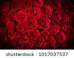 natural red roses background | Shutterstock . vector #1017037537