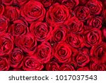 natural red roses background | Shutterstock . vector #1017037543