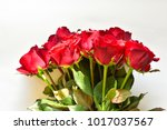 natural red roses background | Shutterstock . vector #1017037567