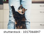 domestic life with pet. playful ... | Shutterstock . vector #1017066847