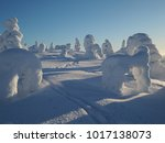Trees Covered In Snow  Sy Te ...