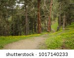 lovely narrow trail in the... | Shutterstock . vector #1017140233