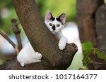 Stock photo adorable kitten posing outdoors in summer 1017164377