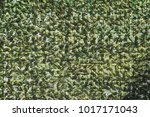 abstract floral background. | Shutterstock . vector #1017171043