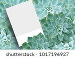 blank postcard or brochure... | Shutterstock . vector #1017196927