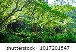 green huge jungle tree in the... | Shutterstock . vector #1017201547
