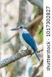 bird  collared kingfisher ... | Shutterstock . vector #1017302827