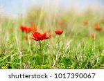 spring flowers blooming | Shutterstock . vector #1017390067