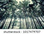 winter forest background  | Shutterstock . vector #1017479707