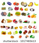 all exotic fruits. | Shutterstock .eps vector #1017483613