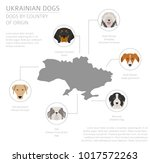 dogs by country of origin.... | Shutterstock .eps vector #1017572263