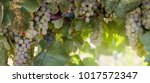 horizontal header with white...   Shutterstock . vector #1017572347