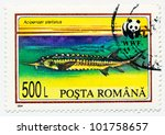 Small photo of ROMANIA - CIRCA 1994: A stamp printed in Romania shows fish Acipenser stellatus, circa 1994