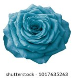 turquoise  rose  on a white... | Shutterstock . vector #1017635263