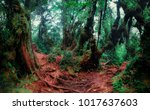 mysterious landscape of foggy... | Shutterstock . vector #1017637603