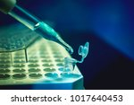 cancer crispr gene editing... | Shutterstock . vector #1017640453