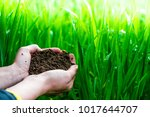 field  nature with hand or palm.... | Shutterstock . vector #1017644707
