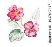 watercolor drawing of fresh... | Shutterstock . vector #1017647437