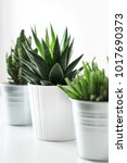 various cactus and succulent... | Shutterstock . vector #1017690373