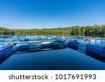 fish cage  floating basket for...   Shutterstock . vector #1017691993