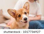 close up portrait of cute happy ...   Shutterstock . vector #1017736927