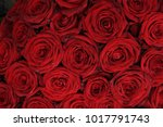 red roses in a bridal bouquet | Shutterstock . vector #1017791743