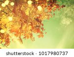 autumn leaves background | Shutterstock . vector #1017980737