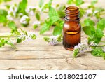 peppermint essential oil and... | Shutterstock . vector #1018021207