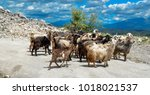 Goats In The Mountain Horns...