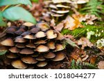 Closeup Of A Group Of Small...