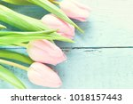 tulips on blue wooden background | Shutterstock . vector #1018157443