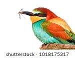bird and mosquito in beak on... | Shutterstock . vector #1018175317