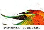 colorful bird and watercolor... | Shutterstock . vector #1018175353