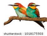 amorous pair of birds on a... | Shutterstock . vector #1018175503