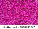 pink orchid flowers background. | Shutterstock . vector #1018238947