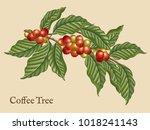 coffee tree elements  retro... | Shutterstock .eps vector #1018241143