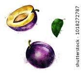 plum on white background.... | Shutterstock . vector #1018272787