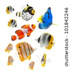 reef fish, marine fish isolated on white background - stock photo