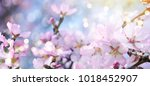 background with fresh gypsophila | Shutterstock . vector #1018452907