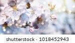 background with fresh gypsophila | Shutterstock . vector #1018452943