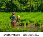 mekong delta  vietnam   sep 2 ... | Shutterstock . vector #1018503367