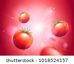 juicy tomatoes with water drops ... | Shutterstock .eps vector #1018524157