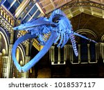 Small photo of Natural History Museum, London / UK - 02/02/18: Skeleton of blue whale (Balaenoptera musculus) 'Hope' in Hintze Hall.