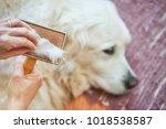 woman combs old golden... | Shutterstock . vector #1018538587