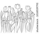 Vector Contour Tulip Daffodil...